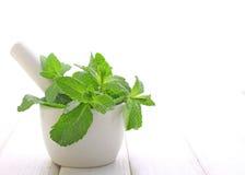 Muntbladeren in het wit Royalty-vrije Stock Foto