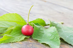 Muntingia calabura, Asian cherry fruit Stock Photo
