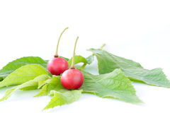 Muntingia calabura, Asian cherry fruit Stock Images