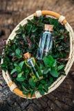 Muntolie en geurige essentie in kleine flessen met pepermunt l stock afbeeldingen