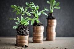 Muntstukken met jonge planten in grond Het concept van de geldgroei stock afbeeldingen
