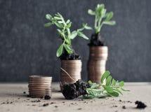 Muntstukken met jonge planten in grond Het concept van de geldgroei royalty-vrije stock afbeelding