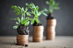 Muntstukken met jonge planten in grond Het concept van de geldgroei stock afbeelding