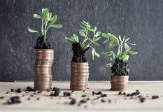 Muntstukken met jonge planten in grond Het concept van de geldgroei royalty-vrije stock afbeeldingen