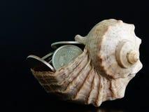 Muntstukken in shell royalty-vrije stock afbeelding