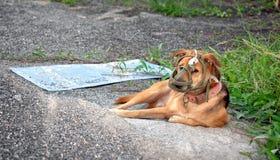 Munvakt Soft Muzzle på en husdjurhund arkivfoto
