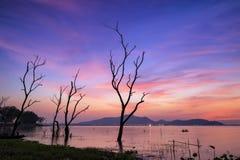 Muoiono gli alberi nel tramonto Fotografie Stock Libere da Diritti