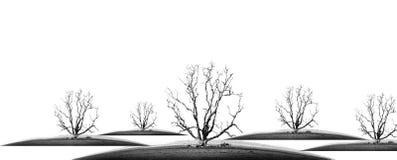 Muore l'albero fotografie stock libere da diritti