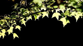 . muovendosi nel vento e nella luce solare, HD 1080P Immagine Stock