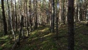 Muoversi regolare attraverso la foresta profonda al colpo di giorno soleggiato POV video d archivio
