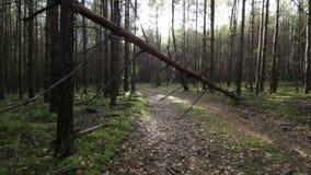 Muoversi regolare sotto l'albero caduto sulla strada nel colpo della foresta POV archivi video