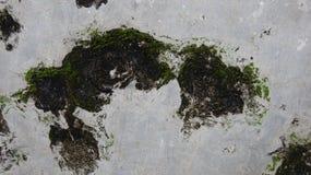 Mur érodé par des champignons, un fond d'image gentil photographie stock libre de droits