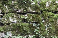 Mur avec de la mousse Image stock