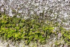 Mur avec de la mousse Photographie stock