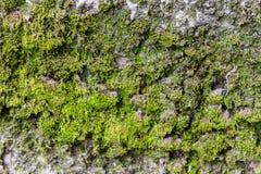 Mur avec de la mousse Images stock