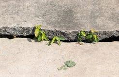 Mur avec des fissures Photo libre de droits