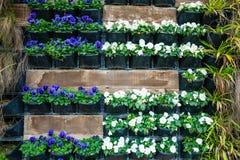 Mur avec des pots de fleur Photo libre de droits