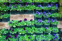 Mur avec des pots de fleur Photo stock