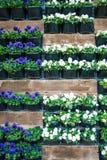 Mur avec des pots de fleur Image stock