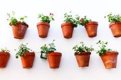 Pots de fleur Image libre de droits