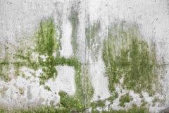 Mur avec le moule Image libre de droits