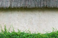Mur avec les plantes vertes Photo stock
