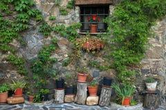 Mur avec les usines et la fenêtre Photographie stock libre de droits