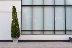 Mur beige et grand vitrail avec la plante verte dans le pot Photo stock