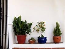 Mur blanc avec des pots Image libre de droits