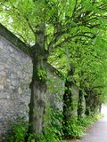 Mur bordé d'arbres en Irlande Photos stock
