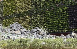 Mur décoré bon naturel conçu par la plante, la fleur et le premier plan rocheux image stock