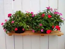 Mur décoratif avec la nature de pot de fleur Photos libres de droits