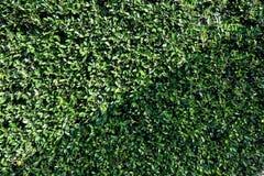Mur d'arbre Image stock