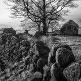 Mur d'arbres de grange noir et blanc Image libre de droits