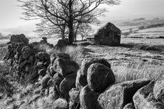 Mur d'arbres de grange noir et blanc Image stock