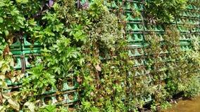 Mur d'herbe