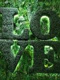Mur d'intérieur d'herbe verte et d'usine avec le mot d'amour Photo libre de droits