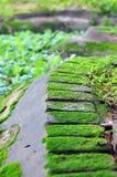 Mousse sur la brique Photo stock