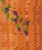 Mur de briques avec du raisin Photos stock