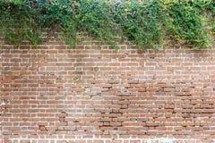 Mur de briques avec la haie naturelle et contrastante pour des titres de glissière Image libre de droits
