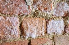 Mur avec le champignon de moule photos libres de droits