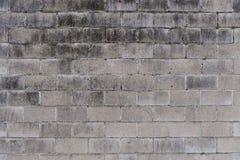 Mur de briques défraîchi par blanc avec de la mousse Image libre de droits