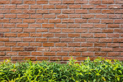 Mur de briques et fond d'arbre Photographie stock libre de droits