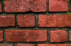 Mur de briques humide rouge pendant le matin pluvieux Image stock
