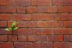 Mur de briques rouge foncé avec le fond de fougère Photo libre de droits