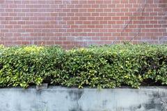 Mur de briques rouge pâle avec le jardin extérieur d'usine photos stock