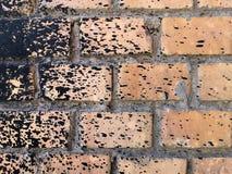 Mur de briques rugueux de pêche éclaboussé avec de la résine noire photos libres de droits
