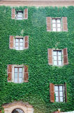 Mur de Chambre avec le lierre photo stock