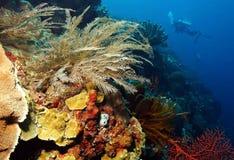 Mur de corail Photo libre de droits