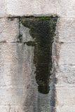 Mur de détail d'humidité images libres de droits